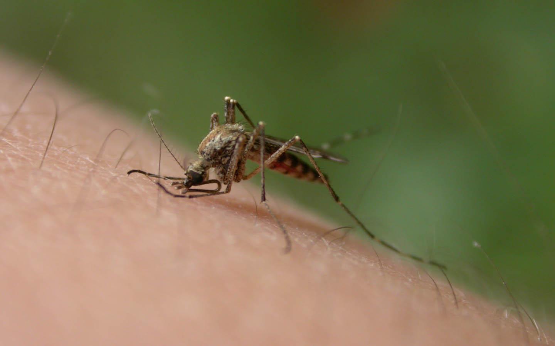 10+1 bevált szúnyogriasztó tipp